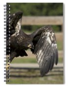 Bald Eagle In Flight Photo Spiral Notebook