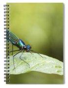 Banded Demoiselle Digital Art Spiral Notebook