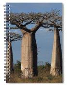 baobabs of Madagascar Spiral Notebook