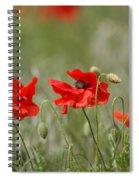 Beautiful Poppies 1 Spiral Notebook