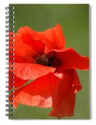 Beautiful Poppies 3 Spiral Notebook
