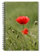Beautiful Poppies 4 Spiral Notebook
