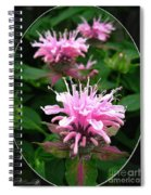 Bee Balm Named Panorama Pink Spiral Notebook