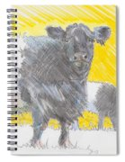 Belted Galloway Cows Spiral Notebook