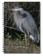 Birds Of The Lowcountry Spiral Notebook