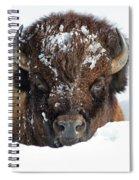 Bison In Snow Spiral Notebook