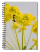 Black Garden Ant On Yellow Flower Spiral Notebook