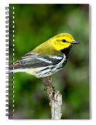 Black Throated Green Warbler Spiral Notebook