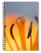 Bloom Of Lily Spiral Notebook