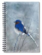 Blue Bird  Spiral Notebook