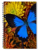 Blue Butterfly On Mums Spiral Notebook