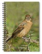 Blue Grosbeak Spiral Notebook