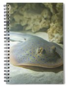 Blue Spotted Fantail Ray  Spiral Notebook