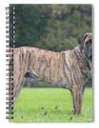 Boerboel Dog Spiral Notebook
