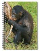 Bonobo Spiral Notebook