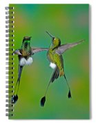 Booted Racket-tail Hummingbird Males Spiral Notebook