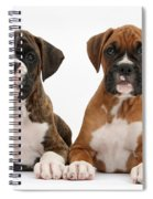 Boxer Puppies Spiral Notebook