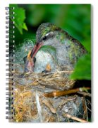 Broad-billed Hummingbird And Young Spiral Notebook