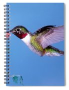 Broad-tailed Hummingbird Spiral Notebook