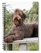 Brown Labradoodle Spiral Notebook