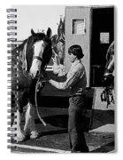 Budweiser Clydesdales La Fiesta De Los Vaqueros Rodeo Parade Tucson Arizona 1984 Spiral Notebook