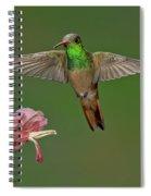 Buff-bellied Hummingbird Spiral Notebook