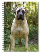 Bullmastiff Dog Spiral Notebook