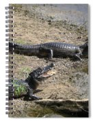 Caiman Spiral Notebook