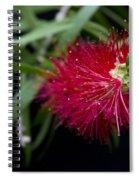 Callistemon Citrinus - Crimson Bottlebrush Hawaii Spiral Notebook