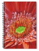 Cameo Spiral Notebook