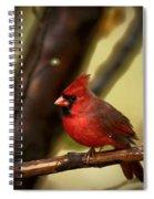 Cardinal Pose Spiral Notebook
