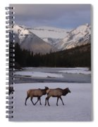 Elk Crossing, Banff National Park, Alberta Spiral Notebook