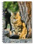 Cats In Hydra Island Spiral Notebook