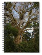 Cathedral Fig Tree Spiral Notebook