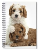 Cavapoo Puppies Hugging Spiral Notebook