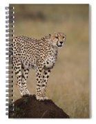 Cheetah On Termite Mound Spiral Notebook