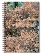 Cherry Blossoms In Pink And Brown Spiral Notebook
