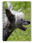 Chinese Crested Dog Spiral Notebook