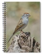 Chipping Sparrow Spiral Notebook