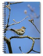 Chipping Sparrow Perched In A Tree Spiral Notebook