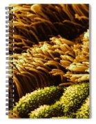 Cilia In Lung, Sem Spiral Notebook