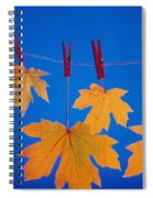 Close-up Of Fall Colored Maple Leaves Spiral Notebook
