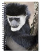 Colobus Monkey Spiral Notebook