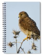 Common Kestrel Falco Tinnunculus Spiral Notebook