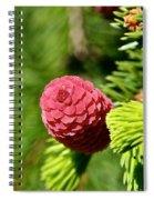Cone Top Spiral Notebook