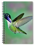 Costas Hummingbird Spiral Notebook