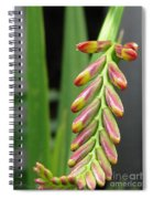 Crocosmia Named Lucifer Spiral Notebook