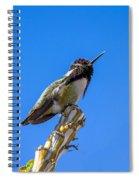 Cute Hummer Spiral Notebook