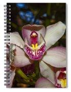 Cymbidium Orchid Spiral Notebook