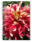 Dahlia Named Bodacious Spiral Notebook